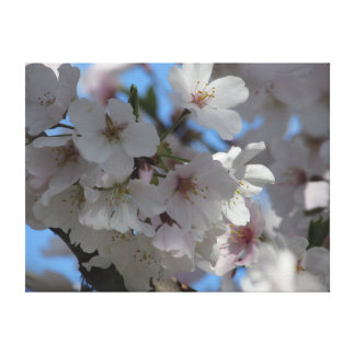 Cherry Blossoms I Stretched Canvas Print