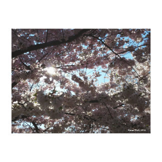 Cherry Blossoms II Stretched Canvas Prints