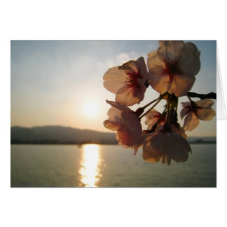 Cherry Blossoms in Japan Card