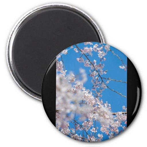 Cherry Blossoms in Japan Fridge Magnets