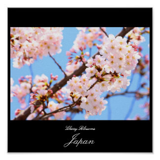 Cherry Blossoms in Japan Poster