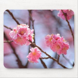 Cherry Blossoms in Seoul Mouse Pad