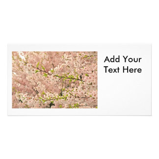 Cherry Blossoms in Spring Photo Greeting Card