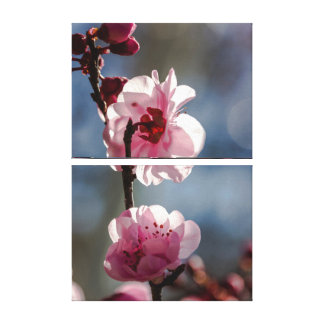 Cherry Blossoms in the Sunshine Triptych Art Gallery Wrap Canvas