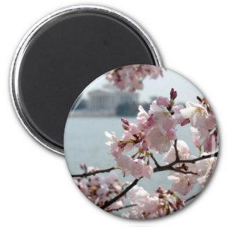 Cherry Blossoms in Washington DC 6 Cm Round Magnet