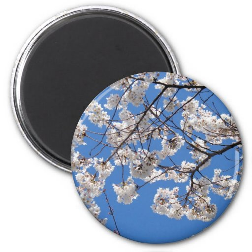 Cherry Blossoms in Washington DC Magnets