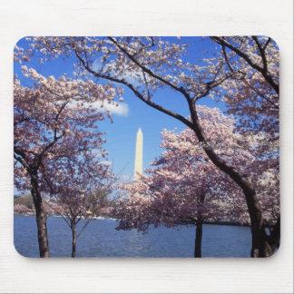 Cherry Blossoms in Washington DC mousepad