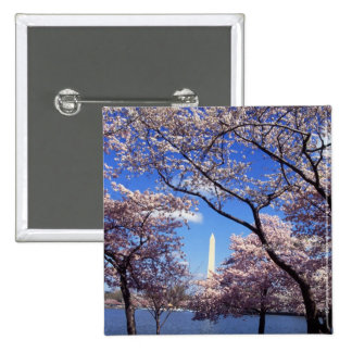 Cherry Blossoms in Washington DC pinback button