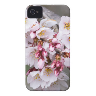 Cherry Blossoms iPhone 4 Case