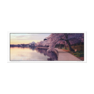 Cherry Blossoms- Jefferson Memorial- Panoramic Canvas Print