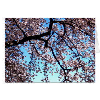 Cherry Blossoms * Love Greeting Card