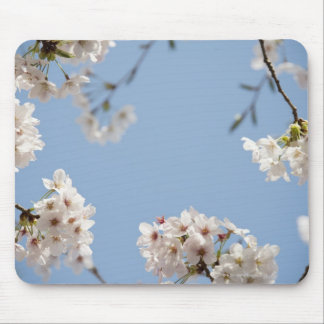 Cherry blossoms mouse pad