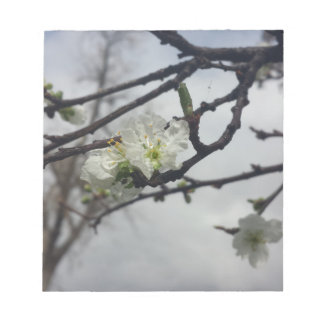 Cherry Blossoms Note Pad