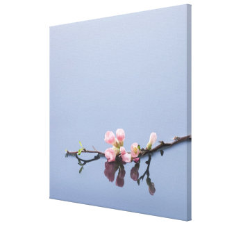 Cherry blossoms on water canvas prints