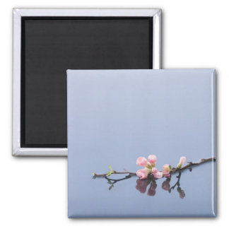 Cherry blossoms on water square magnet