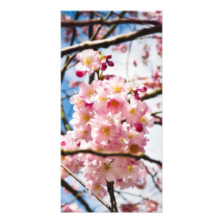 Cherry Blossoms Personalized Photo Card