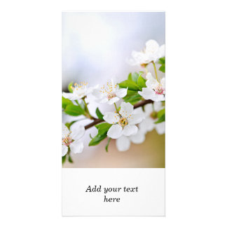 Cherry blossoms customized photo card