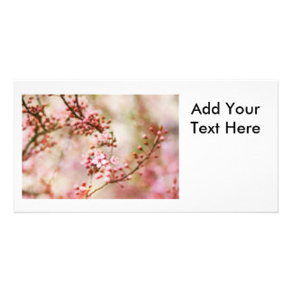 Cherry Blossoms Photo Personalized Photo Card