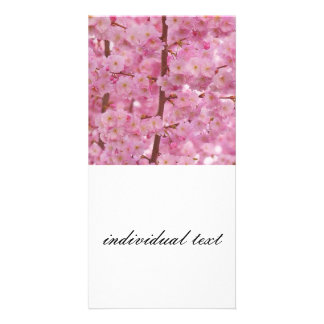 Cherry Blossoms,pink Picture Card