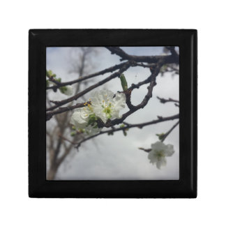 Cherry Blossoms Small Square Gift Box