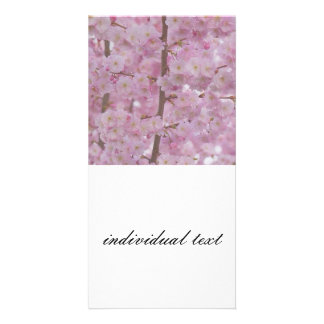 Cherry Blossoms,soft pink Personalized Photo Card