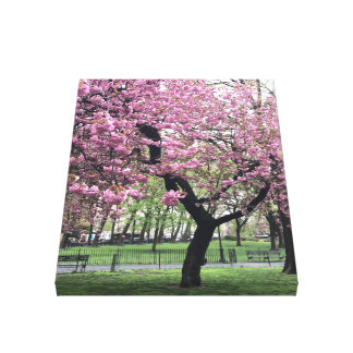 Cherry Blossoms Springtime Tree NYC New York City Canvas Print