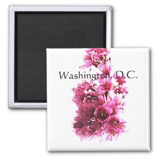 Cherry blossoms. Washington, D.C. Magnet