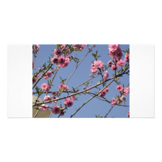 Cherry Flowers Photo Card Template