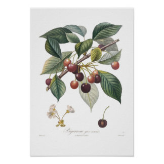 Cherry,Large heart-shaped Poster