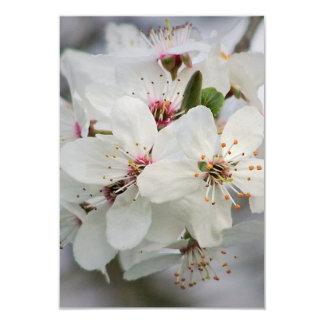 Cherry Sakura Blossom Card