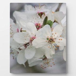 Cherry Sakura Blossom Plaque