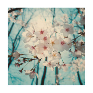 Cherry Sakura Blossom Wood Print