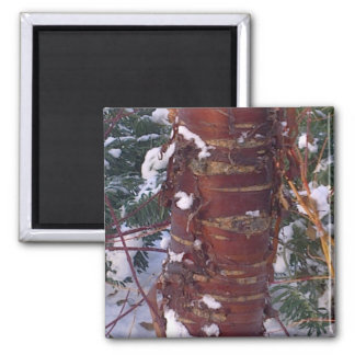 Cherry Tree Bark Magnet