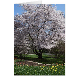 Cherry Tree Card