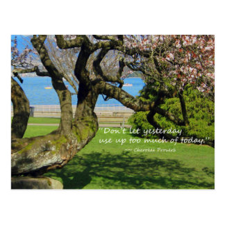 Cherry Tree Cherokee Proverb Postcard