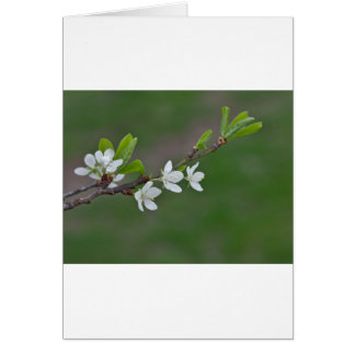 Cherry tree flowers card