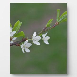 Cherry tree flowers plaque