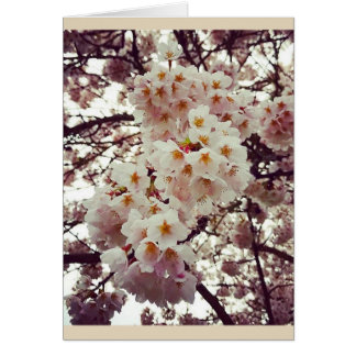 Cherry Tree in Bloom Card