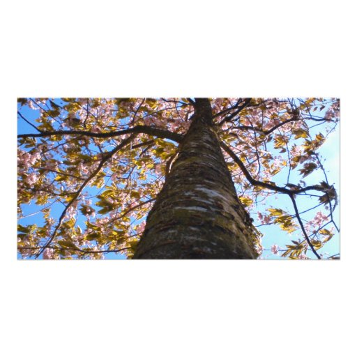 Cherry Tree Personalized Photo Card