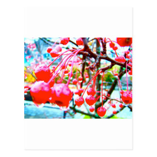 Cherry Tree Postcard