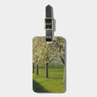 Cherry Trees Luggage Tag