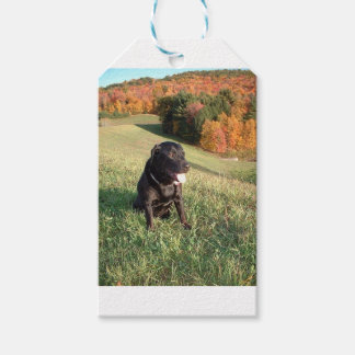 Chert Dog Gift Tags