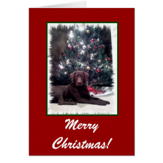 Chesapeake Bay Retriever, Merry Christmas! Card