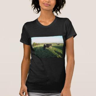 Cheshire Cattle Tee Shirts