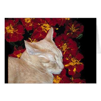 Cheshire Kitten in Marigolds Card
