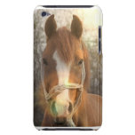 Chestnut Arab Horse iTouch Case iPod Touch Cover