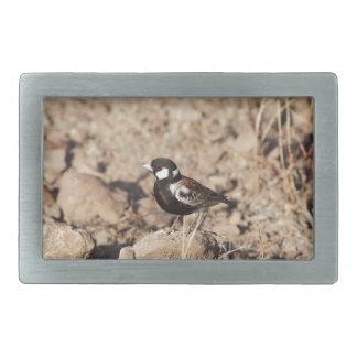 Chestnut backed sparrowlark (Eremopterix leucotis) Belt Buckle