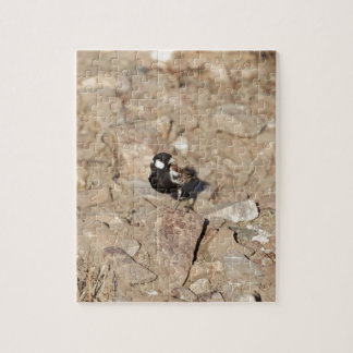 Chestnut backed sparrowlark (Eremopterix leucotis) Jigsaw Puzzle