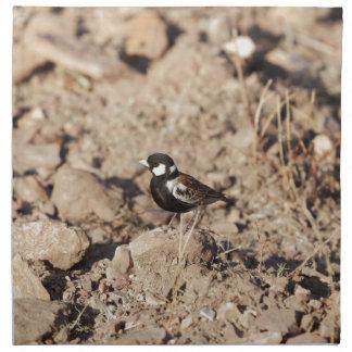 Chestnut backed sparrowlark (Eremopterix leucotis) Napkin