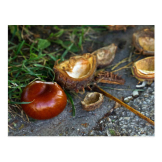 Chestnut (Conker): Fall is here Postcard